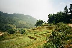 (michellekwong.) Tags: vietnam sapa ricepaddies