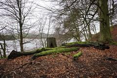 Stump and Logs. Talkin Tarn. Cumbria. 20/01/2020 (Mike Orrell Photography) Tags: woodland winter cumbria side country tarn talkin a6000 sony walks