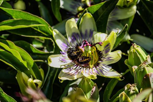 Bumble Bee 05