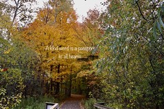 Kindness (Haytham M.) Tags: kind autumn fall canada ontario bridge path trees kindness