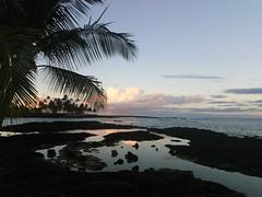 daybreak at the bay (BarryFackler) Tags: morning sunrise daybreak sky clouds weather horizon tidepool lavarock palmtrees tropical silhouette shore bay coast coastline seashore seaside reflection 2020 shoreline coastal littoral kona pacificocean bigisland hawaii hawaiiisland honaunau honaunaubay hawaiianislands sandwichislands pacific polynesia island marine southkona sea saltwater waves westhawaii water ecology ecosystem ocean outdoor konacoast aquatic barryfackler barronfackler paradise nature rocks park beachpark beach honaunaubeachpark explore explored inexplore