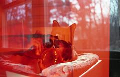 img280 (ToMeKKKK) Tags: film filmphotography filmisnotdead filmshooterscollective onfilm fujifilm buyfilmnotmegapixels 35mmfilm fuji fujicolor fujichrome analog analogphoto analogue analoguepeople pentax pentaxk1000 mir1v doubleexposure multipleexposure