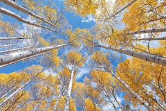 The Rise (Aaron Reed Photography) Tags: luxuryfineart limitededition skies blue autumn fall aspen aaronreed aaronreedprints aaronreedphotography