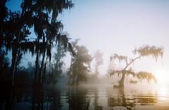 (ernestohemingwayo) Tags: canonef 35mm film taxodiumdistichum florida winter dawn