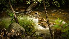 Alameda Creek Stream Sunol Wilderness  No.3 (CDay DaytimeStudios w /1 Million views) Tags: california landscape trees cloudysky earlyfallcolors sunol sanfranciscobayarea eastbayregionalparks hillside hills fall sunolregionalwildernessarea cloudyday