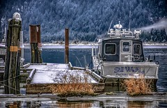 Still Waiting - Pitt River Winter (Christie : Colour & Light Collection) Tags: pitt river wetlands pittlake pittriver wildlifereserve water snow ice craft boat vessel hrd pittpolderecologicalreserve dock pittpolder winter outdoors calm cold moored moor pittmeadows tidal mountain wilderness bc britishcolumbia canada pittlakemarina riverboat grantnarrowsprovincialpark stillwaiting reflections remote northamerica subtemperature misty january 2020 icy coastmountains transom trees outside blue blues pittaddingtonmarshwildlifemanagementarea marsh pittlakebc nature beauty landscape waterscape frosty fishing explorenature naturalbritishcolumbia canadianriver tidalriver westcoastbritishcolumbia pittriverboatlaunch winterscene ecosystem wintery nautical
