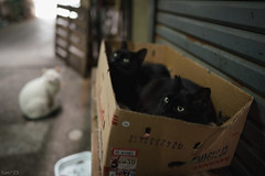 猫 (fumi*23) Tags: ilce7rm3 sony street sel24f14gm 24mm fe24mmf14gm a7r3 animal alley cat chat gato bokeh neko emount ねこ 猫 ソニー 路地