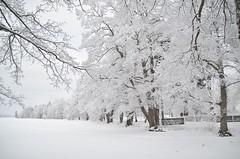 26/1 2019. (johnerlandaxelsson@gmail.com) Tags: gimo uppland sverige vinter natur landskap landscape nolightroom nophotoshop johnaxelsson