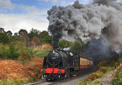 U Class 2-6-0 no. 31806 produces a volcanic exhaust as it exits Foley Park Tunnel (Iand49) Tags: transport railway railroad rail train passengertrain carriages bloodandcustard steam locomotive engine uclass urie southernrailway britishrailways blackengine southernregion smokedeflectors lamp smoke clag exhaust volcanic foleyparktunnel bewdley worcestershire england autumn autumnalcolours goldenbracken historic heritage nostalgia evocative preservation restored power speed motion countryside rural outdoors severnvalleyrailway