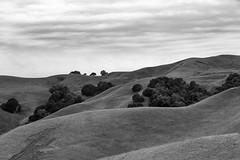 Briones Regional Park, California, USA (takasphoto.com) Tags: bw blackwhite blackandwhite blancoynegro monochrome モノクロ モノクローム 白黒 白黒写真 黑白 24105mm canon canonef24105mmf4lisusmlens canonef24105mmf4lisusm canonlens ef eflens canon5d canon5dmarkiii canoneos5dmarkiii cmos dslr fullframe professional slr キヤノン berkeleyhills brionesregionalpark contracosta contracostacounty diablovalley distritodeparquesregionalesdelestedelabahía lafayette martinez mexicanlandgrant mountdiablo mttamalpais orinda parqueregionalbriones pleasanthill ranchobocadelacañadadelpinole sacramentoriver fotografíadepaisaje landscape landscapephotography landschaftsfotografie paisaje travel travelphotography traveling travels viaje 風景 風景写真