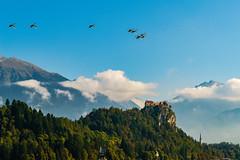 The Bled castle (a7m2) Tags: bled veldes slowenien krain castle history culture travel tourismus whiteswans lake natur karawanken