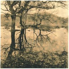 Warm pond (Mark Dries) Tags: markguitarphoto markdries hasselblad500cm planar lith lithprint moersch moerscheasylith foma retrobrom darkroomprint darkroom kennemerduinen water