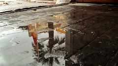 Reflejos bajo la tormenta (Jovi García) Tags: reflection reflejo agua water charco puddle bandera flag palmeras palmtrees cielo sky españa spain