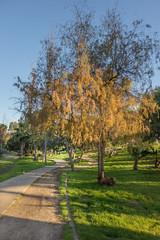ordinario (Carlos Natura) Tags: natural parque sony arbol