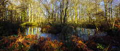 Hope you 'like' it? 4 (howard1916 - Sleepless in Shrewsbury) Tags: pond bracken nationaltrust attinghampark shropshire water frozen ice