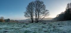 20200121-_1498031-HDR-Pano.jpg (colemanr20) Tags: parkland morning frosty winter nationaltrust walks walk woodland sheringhampark cold