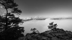 Blick vom Schaufelsen ins Donautal (Jens Schröter) Tags: deutschland de donau donautal dlsr badenwürttemberg landschaft landscape nebel winter baum sw