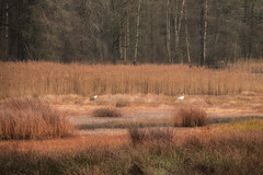 Two in the grasslands (Zoom58.9) Tags: landscape nature birds grassland forest outside trees europe germany wendland landschaft natur vögel gräser wald draussen europa deutschland sony sonydscrx10m4