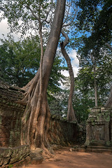 Ta Prohm (Tofubratwurst) Tags: taprohm angkorwat angkor kambodscha cambodia asia asien travel travelphotography reisefotografie baum rajavihara würgefeigen tetramelesnudiflora khmer tofubratwurst nature natur sonyalpha7rm2 sonyilce7rm2 fe1635mmf4zaoss