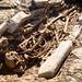 Somerton Romano-Bristish burials