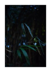 This work is 4/18 works taken on 2019/12/27 (shin ikegami) Tags: sony ilce7m2 a7ii sonycamera 50mm lomography lomoartlens newjupiter3 tokyo 単焦点 iso800 ndfilter light shadow 自然 nature naturephotography 玉ボケ bokeh depthoffield art artphotography japan earth asia portrait portraitphotography