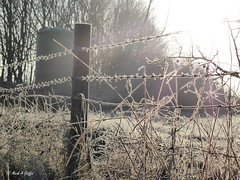 Backlit tangle (mark.griffin52) Tags: england buckinghamshire cheddington rural countryside farm silo fence barbedwire grasses winter frost