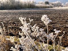 Lindauer Moor 210120-02 (martinritter1) Tags: lindauer moor natur winter frost
