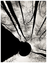 c u r i o s i t y (Listenwave Photography) Tags: old contrast forest pov monotone konica ccd bnw listenwave фовеоныч юнтоловская minolta fineart sanktpetersburg