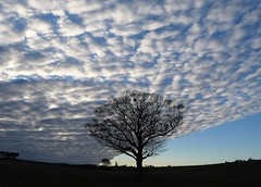Westerly (Conundrum37) Tags: tree sky clouds kent deal windmill