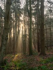 20200121-_1498026-HDR.jpg (colemanr20) Tags: parkland morning frosty winter nationaltrust walks walk woodland sheringhampark cold