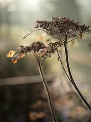 20200121-_1498062.jpg (colemanr20) Tags: parkland morning frosty winter nationaltrust walks walk woodland sheringhampark cold