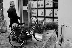 En cherchant  un appartement (Paolo Pizzimenti) Tags: rêve ravenne vélo immobilier chiot fenêtre fujifilm xpro3 xf35mmr f14 velvia acros film pellicule argentique doisneau
