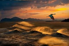 Sulle ali del vento (Va e VIENI) Tags: art ambrosioni zzmanipulation vento tramonto rosso onde mare riva scogli natura uccello