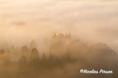Sunset and trees in the mist (Nicolas Pirson photographer) Tags: brussel molenbeek arbres brume brussels bruxelles couhédesoleil landscape mist paysage scheutbos monochrome sunset trees lowaerial lowaerialphotography