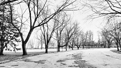 Bleak (KWPashuk (Thanks for >3M views)) Tags: samsung galaxy s8 s8plus lightroom luminar luminar4 kwpashuk kevinpashuk winter park trees mono coronationpark oakville ontario canada outdoors nature