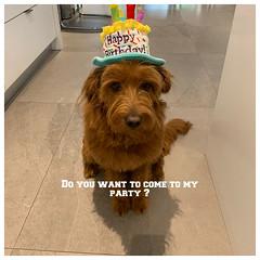 Eintstein having a birthday party