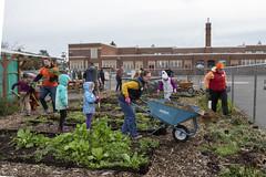 20200120__Vestal Learning Garden MLK Day of Service_20 (ppscomms) Tags: vestalschool mlk day service learning garden