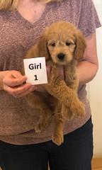 Ariel Girl 1 1-11