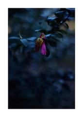 This work is 7/18 works taken on 2019/12/27 (shin ikegami) Tags: sony ilce7m2 a7ii sonycamera 50mm lomography lomoartlens newjupiter3 tokyo 単焦点 iso800 ndfilter light shadow 自然 nature naturephotography 玉ボケ bokeh depthoffield art artphotography japan earth asia portrait portraitphotography