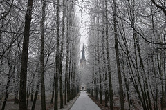 A Winter's Tale (tamasmatusik) Tags: sigmalens sigma 19mm a6000 sony january budapest kirche church churchyard park trees frost rime frozen tale winter fog mist buda cathedral catholic