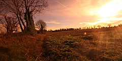 Sun flare (hogie4) Tags: sun flare field landscape sky trees canon 1020 wide angle photocsape