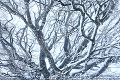 ZAINAK (Obikani) Tags: winter snow tree nature cold forest season outdoor white light blue frost snowy natural ice beautiful color branch frozen scene new wood january environment weather plant scenic frosty abstract art