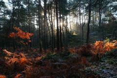 Rocher de la Reine (hbensliman.free.fr) Tags: travel pentax forest nature france winter cold outdoor pentaxart pentaxk1 landscape