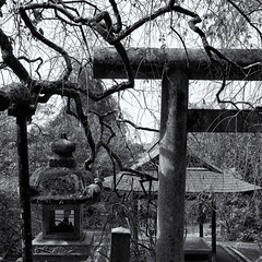 The old shrine (Tim Ravenscroft) Tags: shrine shinto torii branches kyoto japan hasselblad hasselbladx1d monochrome