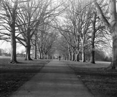 Winter walk (DH73.) Tags: abington park northampton agi agifold fomapan 400 id11