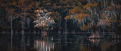 Good night from beautiful Caddo Lake (foto_by_oliver) Tags: caddo lake bayou texas cypress trees spanish moss swamp abstract fall autumn orange yellow caddolake uncertain nikon usa visit colors bald lights reflection misty sunrise morning