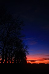 up in the treetops (hogie4) Tags: sunset trees blue hour wide angle abstract canon