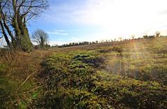 Sun burst 1 (hogie4) Tags: sun worship grass tree field sky vegetation wide angle canon 1020 photoscape
