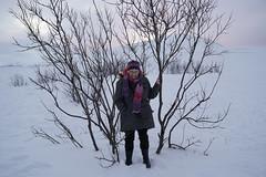 A7306069 (Daniel John Benton) Tags: tromsø tromso troms tromsogfinnmark nordnorge northernnorway norge norway scandinavia europeaneconomicarea eea europe arctic snow snø tree trees sony a7iii a73 a7