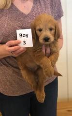 Cinderella Boy 3 1-11